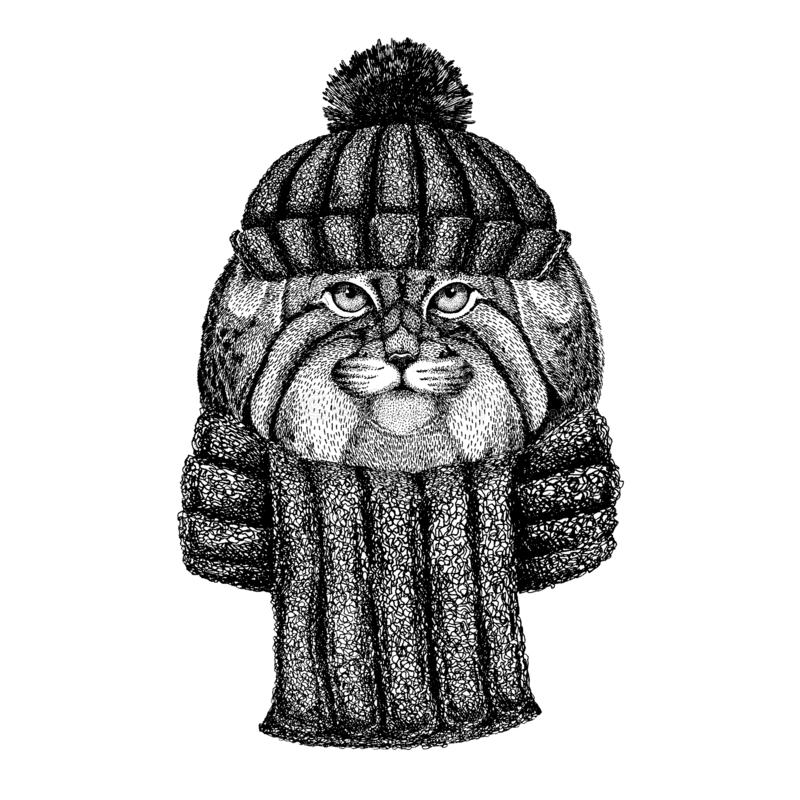 Dzikiego kota Manul Chłodno zwierzę jest ubranym trykotowego zima kapelusz Ciepła pióropuszu beanie bożych narodzeń nakrętka dla  ilustracja wektor