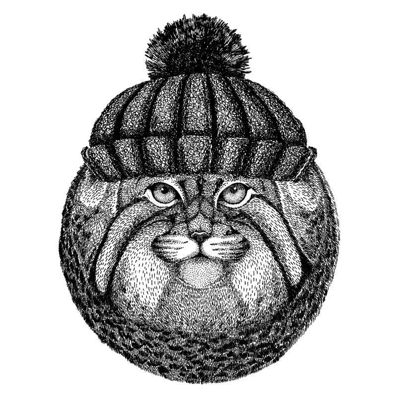 Dzikiego kota Manul Chłodno zwierzę jest ubranym trykotowego zima kapelusz Ciepła pióropuszu beanie bożych narodzeń nakrętka dla  royalty ilustracja
