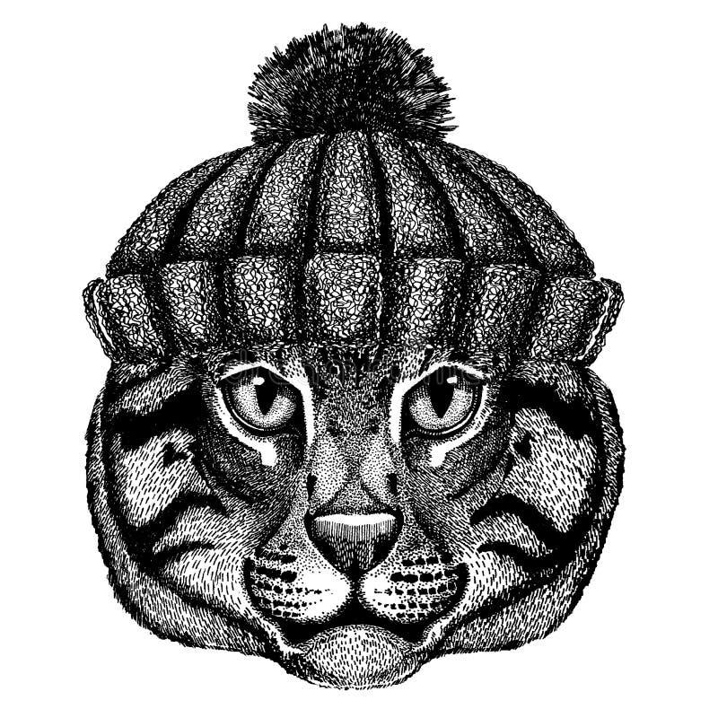 Dzikiego kota połowu kota Chłodno zwierzę jest ubranym trykotowego zima kapelusz Ciepła pióropuszu beanie bożych narodzeń nakrętk ilustracji