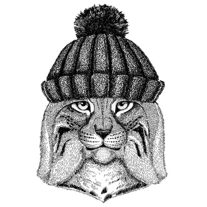 Dzikiego kota rysia rysia rudy bryka Chłodno zwierzę jest ubranym trykotowego zima kapelusz Ciepła pióropuszu beanie bożych narod ilustracji