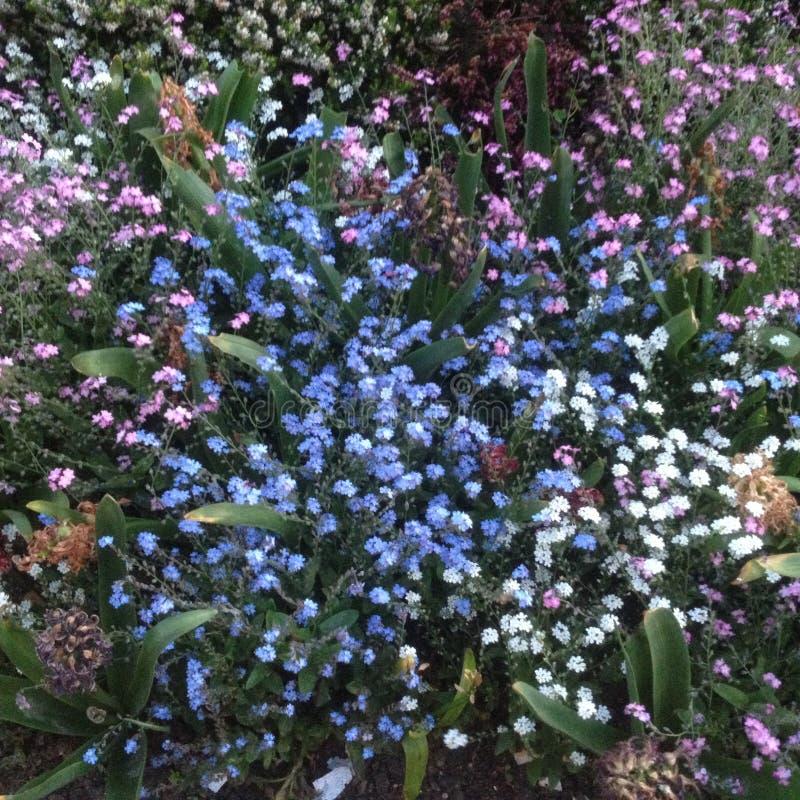 Dzikiego kwiatu drogi przemian w lecie - Paryż, Francja obraz stock