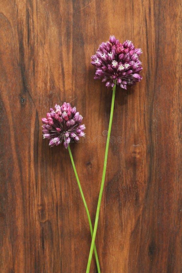Dzikiej cebuli fiołek na drewnianym tle czarny orzech włoski Piękni lat wildflowers dwa kwiaty minimalista Vertical, obrazy royalty free