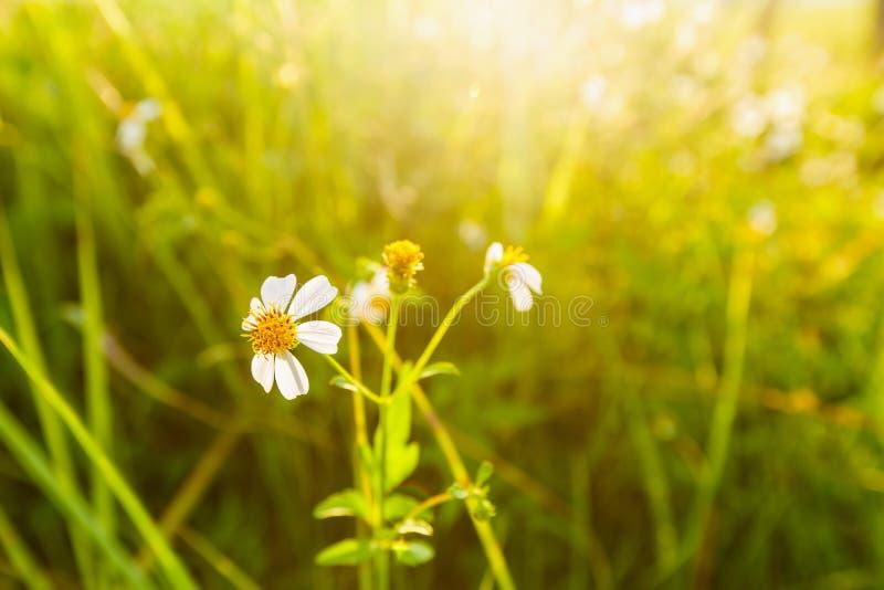 Download Dzikiej trawy kwiat zdjęcie stock. Obraz złożonej z natura - 41955282