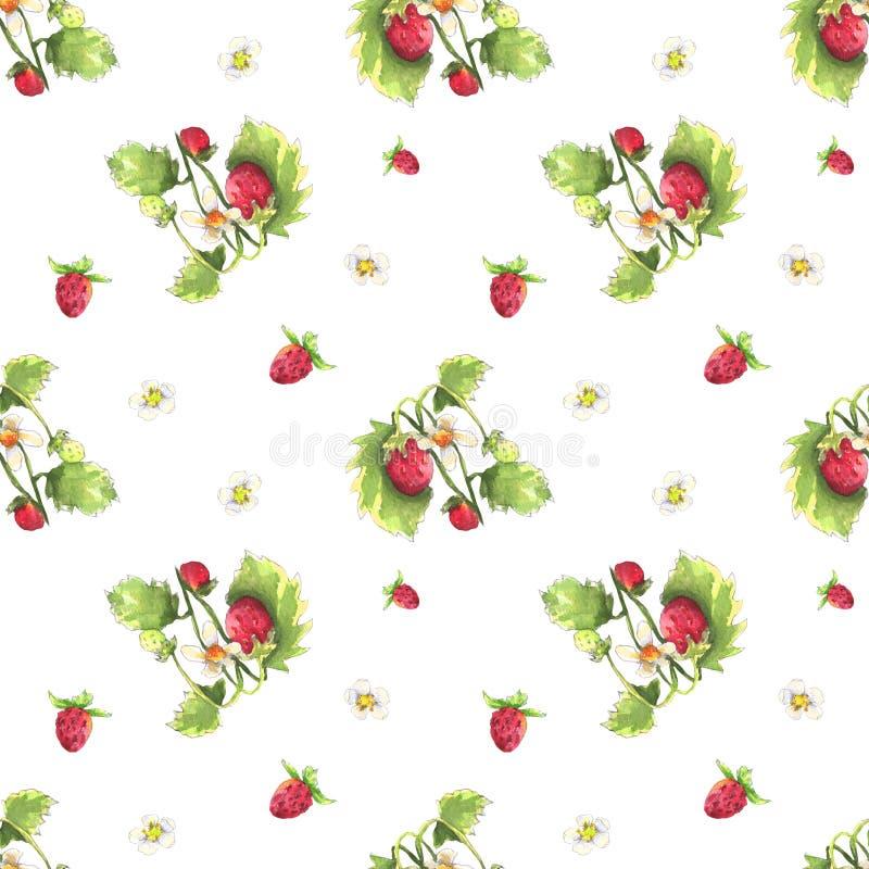 Dzikiej truskawki wz ilustracji