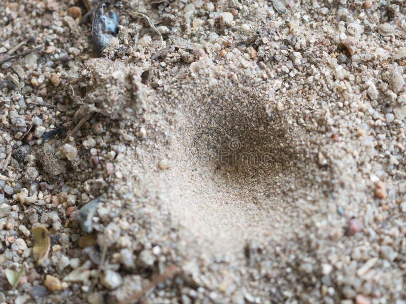 Dziury Zwierzęcy schronienie obrazy stock