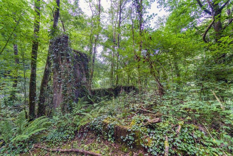 Dziwaczna skalista formacja zakrywająca z bluszczem i otaczająca drzewami zdjęcie stock