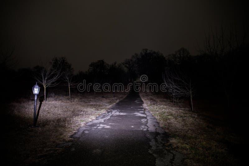 dziwaczny światło w ciemnym lesie przy nocą Sylwetka osoby pozycja w ciemnym lesie z światłem Ciemna noc w lesie przy mgłą zdjęcie stock