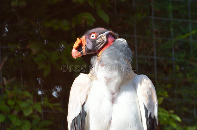 Dziwaczny przyglądający ptak fotografia royalty free