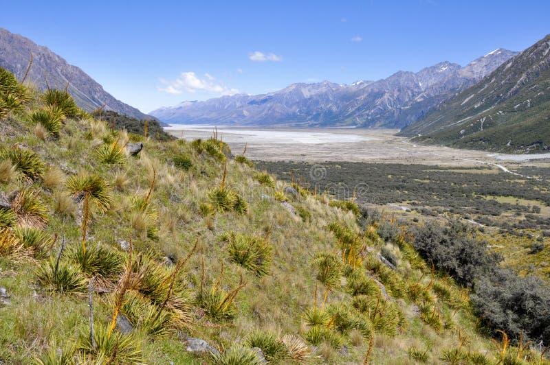 dziwka nowy dolinny Zealand obrazy royalty free