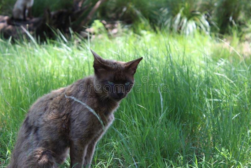 Dziwny dziwaczny kot obrazy royalty free