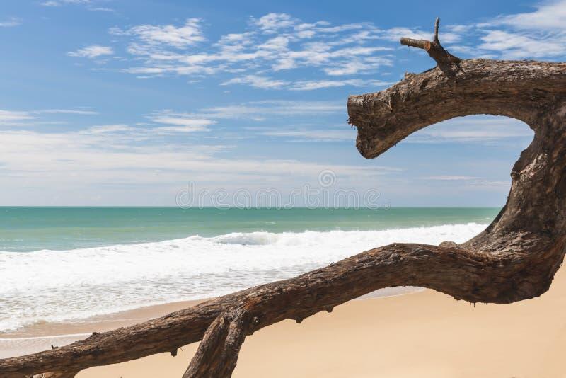 Dziwny logował się plażę obrazy stock