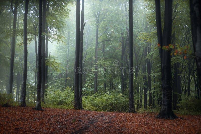 Dziwny niebieski w mglistym lesie bajkowym fotografia stock