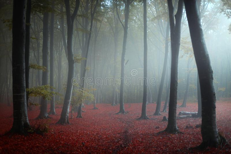 Dziwny niebieski w mglistym lesie bajkowym zdjęcie royalty free