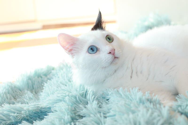 Dziwny przyglądam się biały kota kłamać z ukosa na bławej koc zdjęcia stock