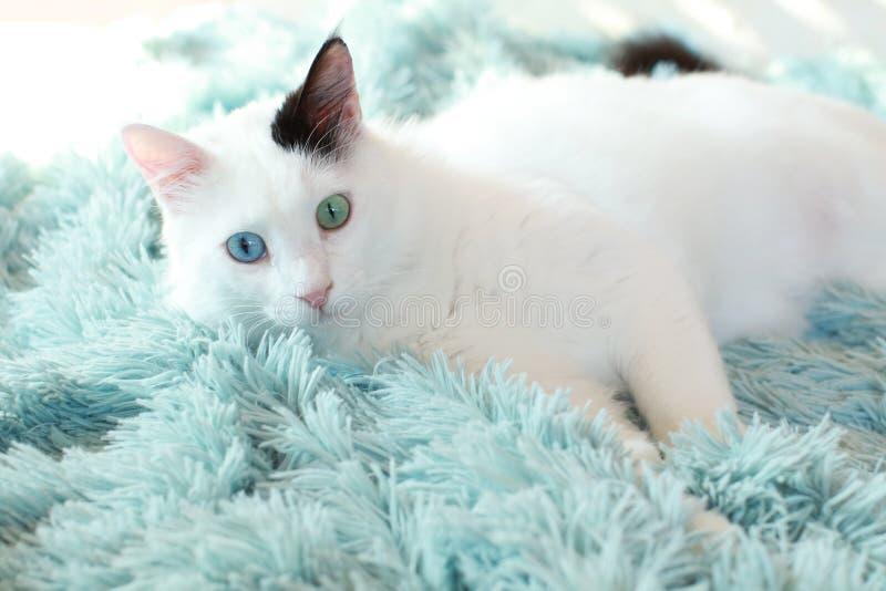 Dziwny przyglądam się biały kota kłamać z ukosa na bławej koc obrazy stock