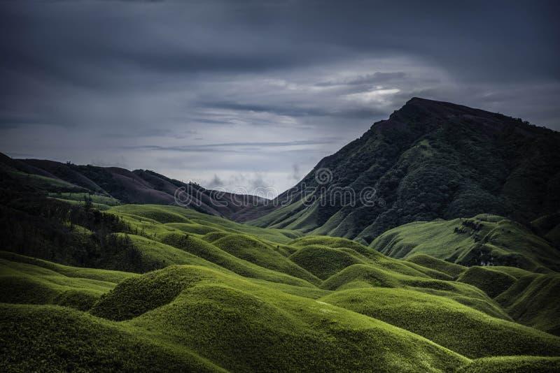 Dzukou dal, Nagaland, norr östliga Indien royaltyfri foto