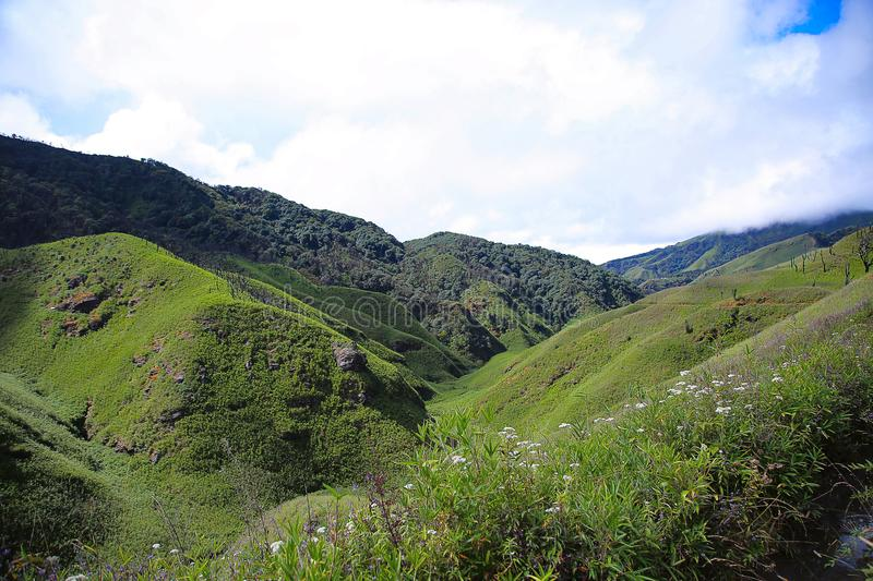 Dzukou Valley. Border of the states of Nagaland and Manipur, India. Well known for its natural beauty, seasonal flowers and the overall flora and fauna royalty free stock image