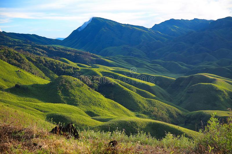 Dzukou Valley. Border of the states of Nagaland and Manipur, India. Well known for its natural beauty, seasonal flowers and the overall flora and fauna stock photography