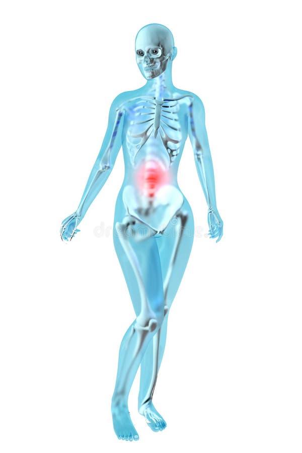 Żeńska anatomia - żołądka ból ilustracji