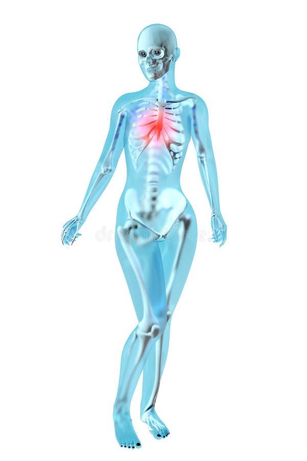 Żeńska anatomia - klatka piersiowa ból royalty ilustracja