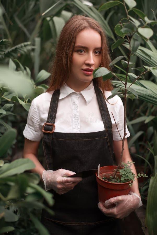 Żeńska ogrodniczki praca w szklarni obrazy royalty free
