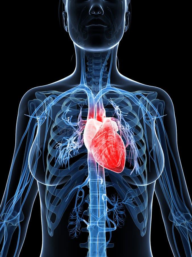 Żeński serce ilustracji