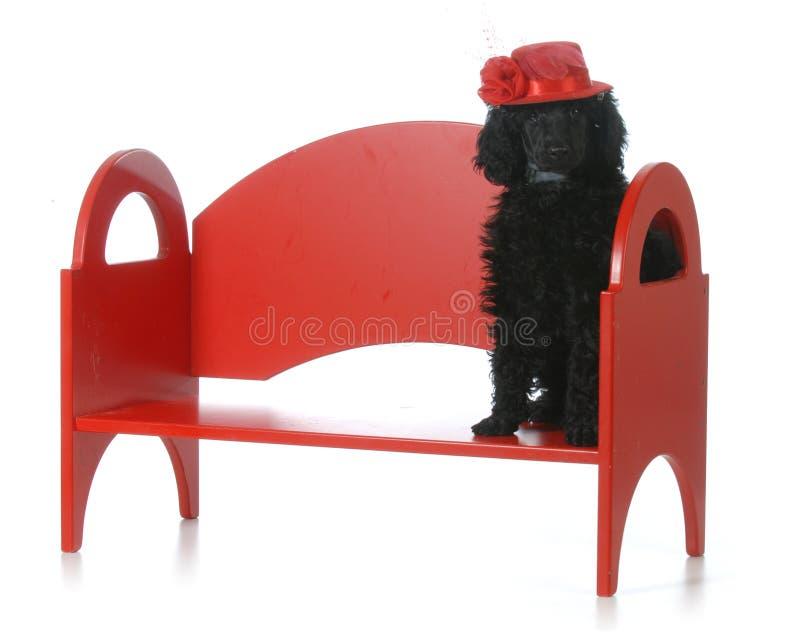 Żeński szczeniak fotografia stock