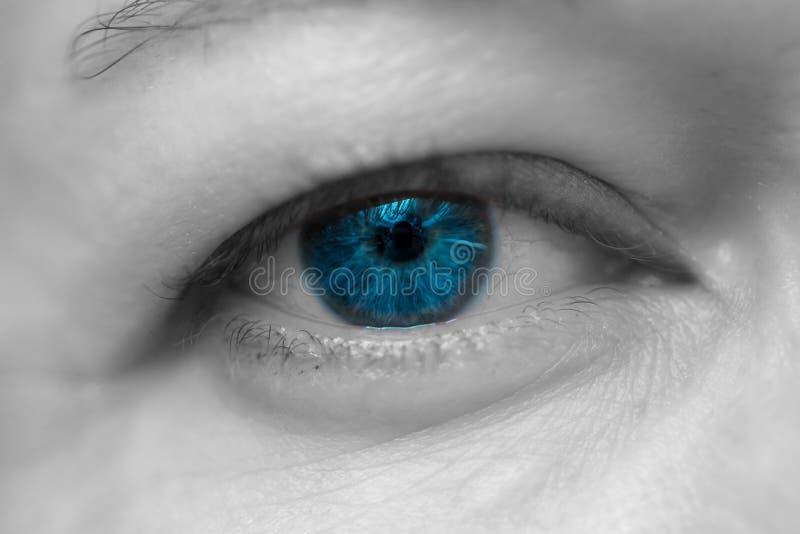 Żeńskiego błękita Pojedynczy oko obraz royalty free