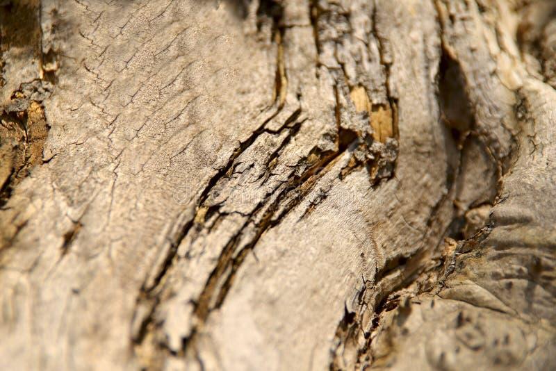 E Η σύσταση του κορμού ενός παλαιού δέντρου με τις ρωγμές και τις συνελίξεις στοκ εικόνα με δικαίωμα ελεύθερης χρήσης