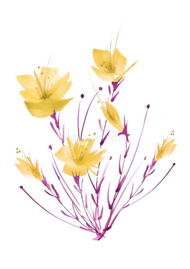 E Μια ανθοδέσμη των λουλουδιών των κίτρινων παπαρουνών, wildflowers σε ένα απομονωμένο λευκό υπόβαθρο απεικόνιση αποθεμάτων