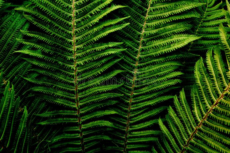 E Σκούρο πράσινο φύλλωμα φτερών Για τον τρόπο ζωής blog, τα κοινωνικό μέσα ή το εσωτερικό : Σκοτεινό ύφος διάθεσης στοκ εικόνα με δικαίωμα ελεύθερης χρήσης