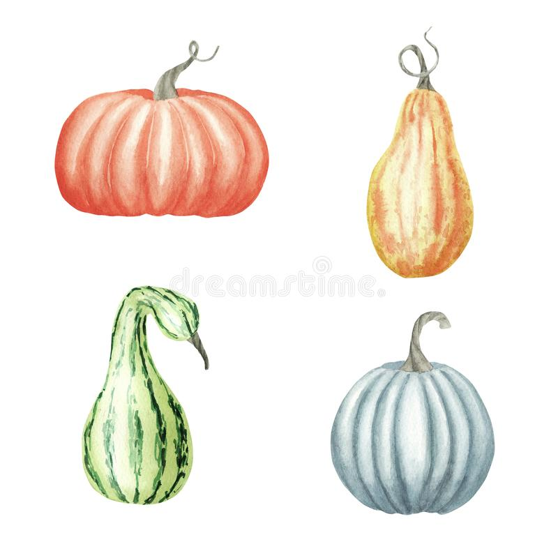 E Σύνολο με τις ώριμες πορτοκαλιές, κίτρινες, πράσινες κολοκύθες Συγκομιδή Atumn, σκίτσο watercolor διανυσματική απεικόνιση