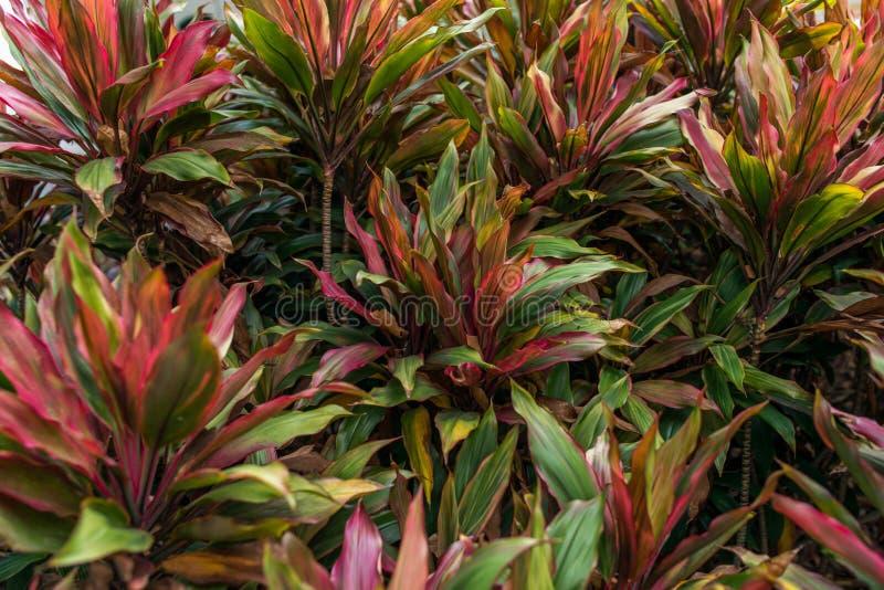 E Φυσικό τροπικό υποβάθρου φύλλωμα ζουγκλών φύσης δασικό στοκ εικόνες