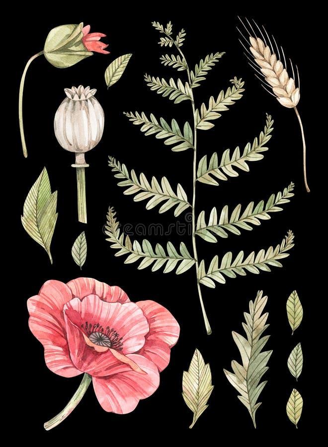 E Ботанический состав с красным маком, папоротником и некоторыми листьями Суккулентный в баке greenery Флористический дизайн иллюстрация вектора