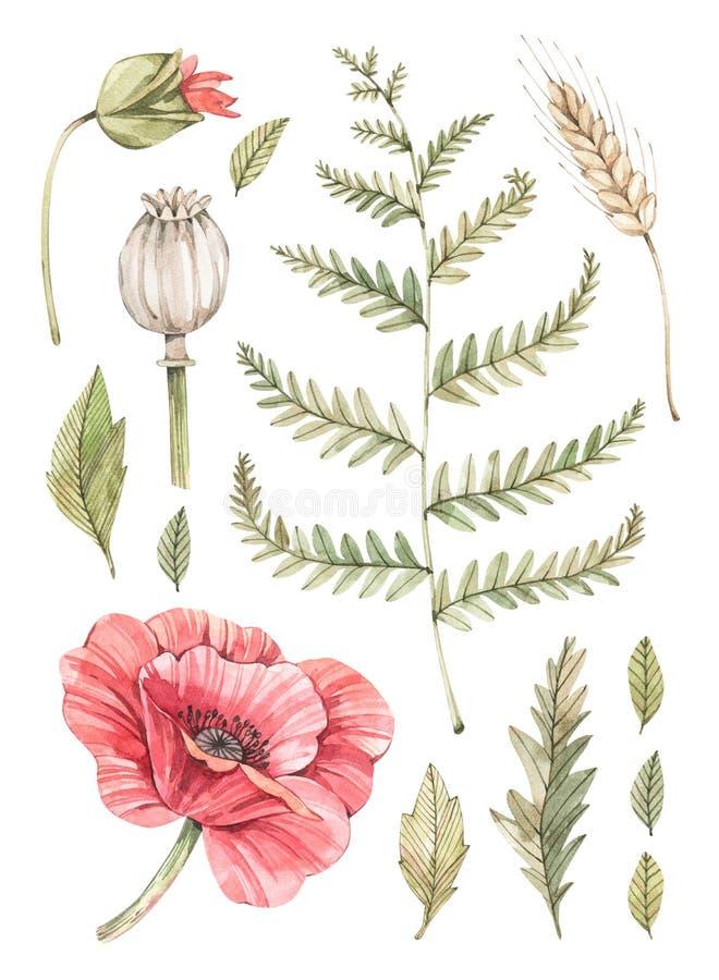 E Ботанический состав с красным маком, папоротником, рожью и некоторыми листьями Суккулентный в баке greenery Флористический иллюстрация вектора