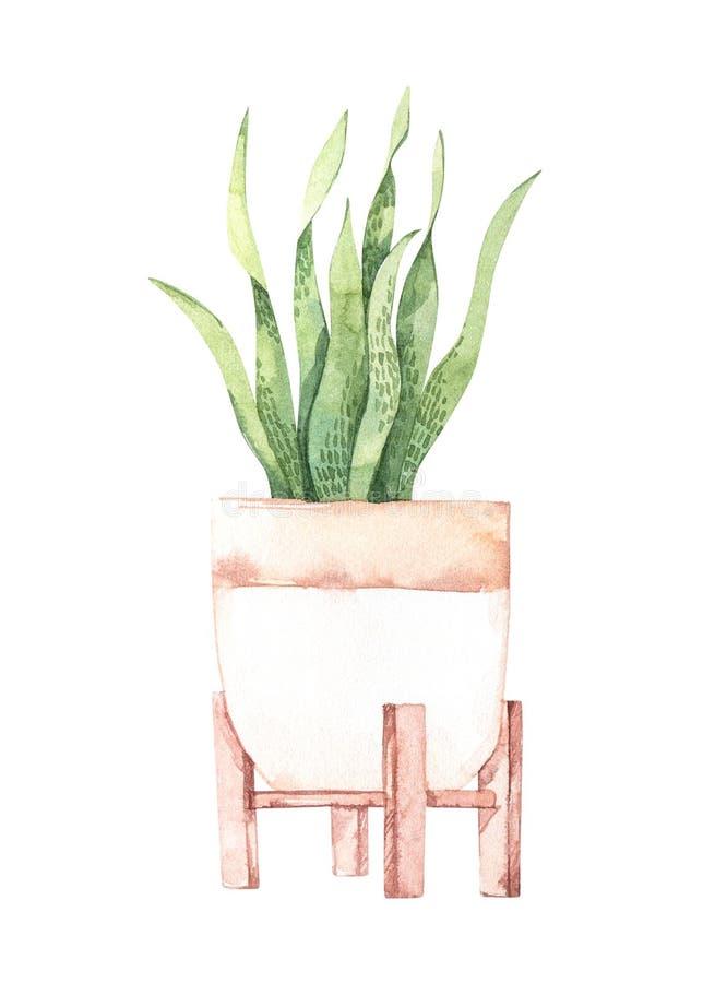E Ботаническое комнатное растение Завод с большими листьями в баке greenery Элемент флористического дизайна Улучшите для иллюстрация вектора