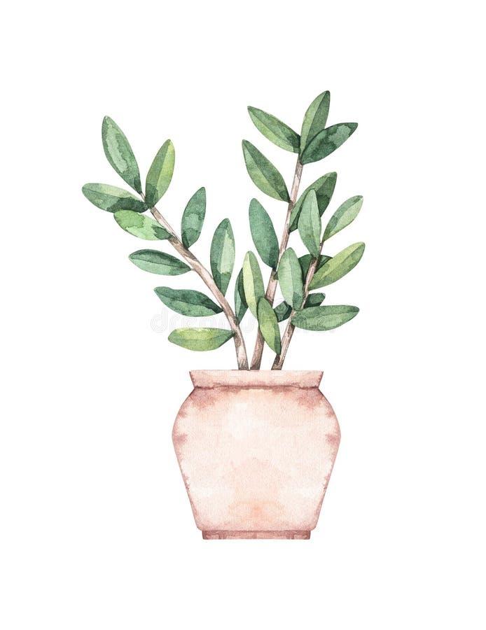 E Ботаническое комнатное растение Суккулентный в баке greenery Элемент флористического дизайна Улучшите для приглашений, карт, бесплатная иллюстрация