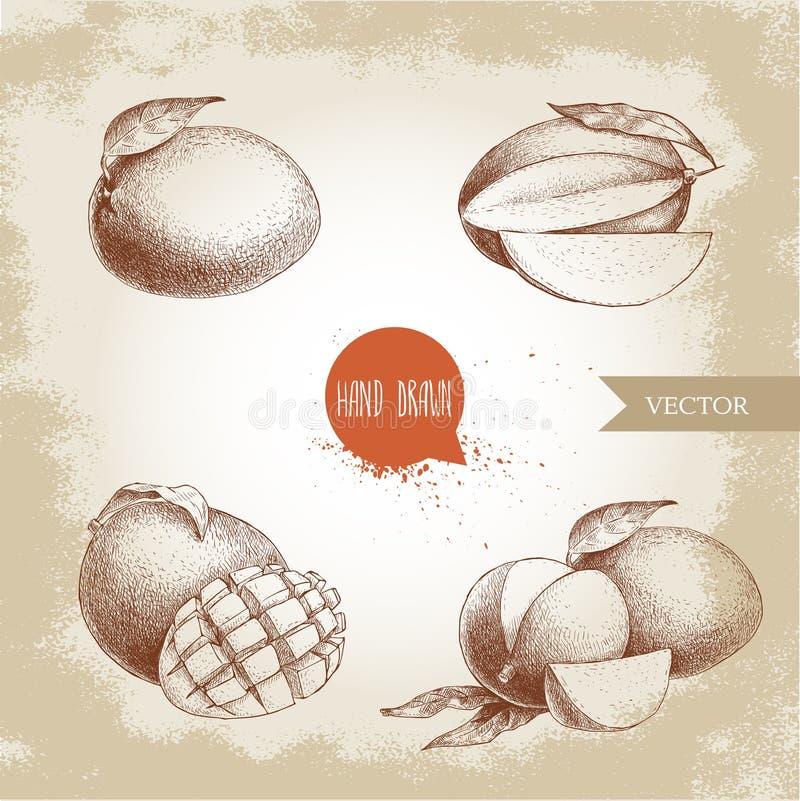 E Иллюстрация плодоовощ вектора стиля эскиза иллюстрация штока