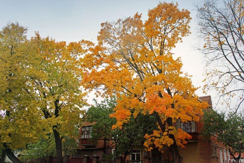 E Красивейшая осень стоковое изображение
