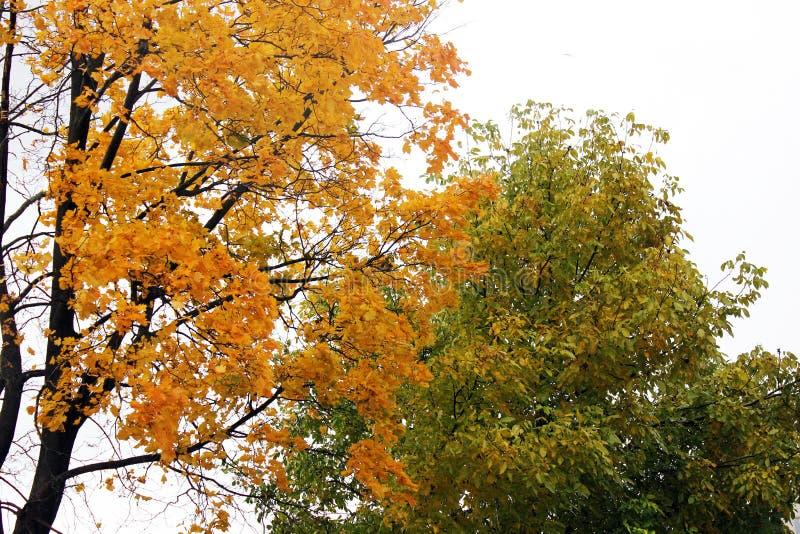 E Красивейшая осень стоковая фотография