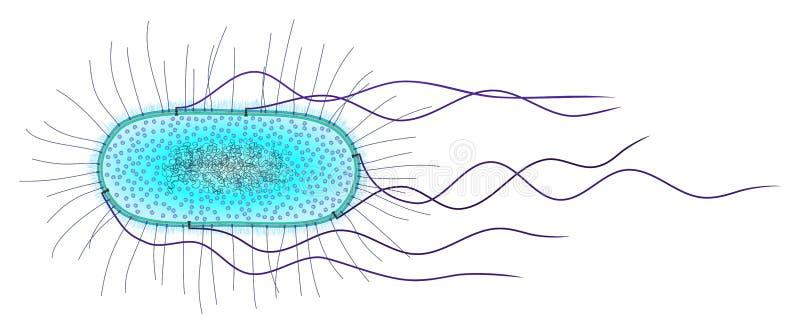 e клетка coli бесплатная иллюстрация