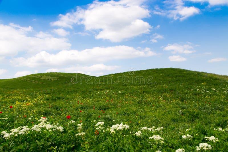 E Проселочная дорога горы среди зеленых холмов Яркая ая-зелен трава стоковое изображение