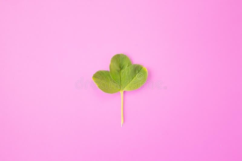 E Рамка от зеленых ветвей, листьев на розовой предпосылке Минимальная концепция, плоское положение, взгляд сверху стоковое фото