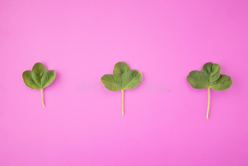 E Рамка от зеленых ветвей, листьев на розовой предпосылке Минимальная концепция, плоское положение, взгляд сверху стоковое фото rf