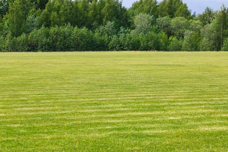 E Точное хорошо выхоленное поле скоро коротк-с волосами молодой зеленой травы Древесина на предпосылке стоковые изображения