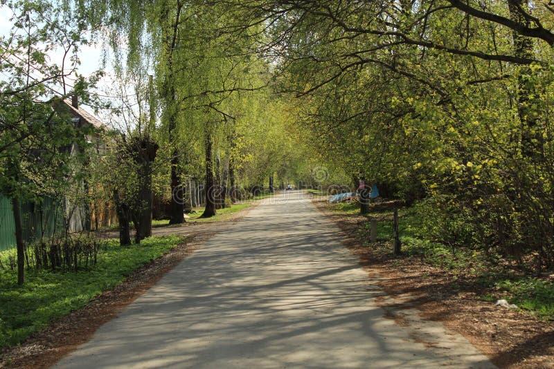 E E Улица Nakhimov стоковое изображение rf