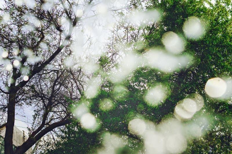 E 从树的绿色bokeh r r o 库存照片