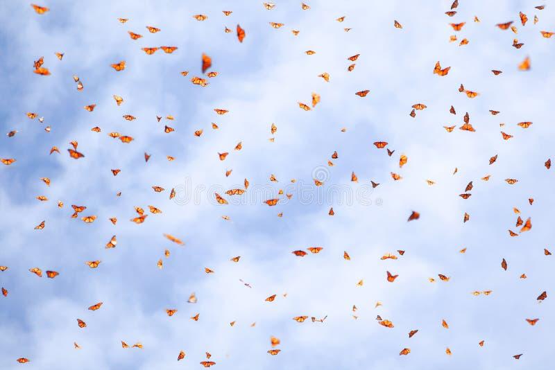 E 在一天空蔚蓝的许多国君橙色蝴蝶与云彩 免版税图库摄影