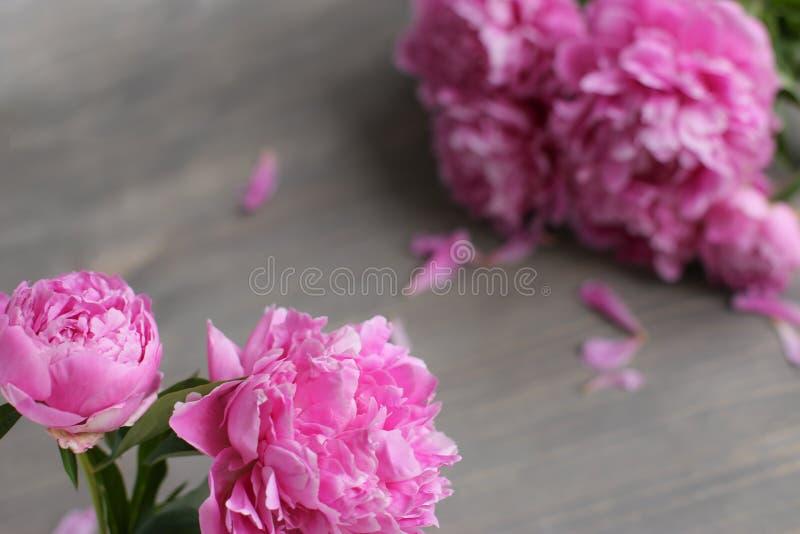 E 在木背景的桃红色牡丹花 r 库存图片