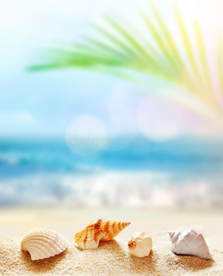 E 在沙子的作为背景的贝壳和海洋 库存照片